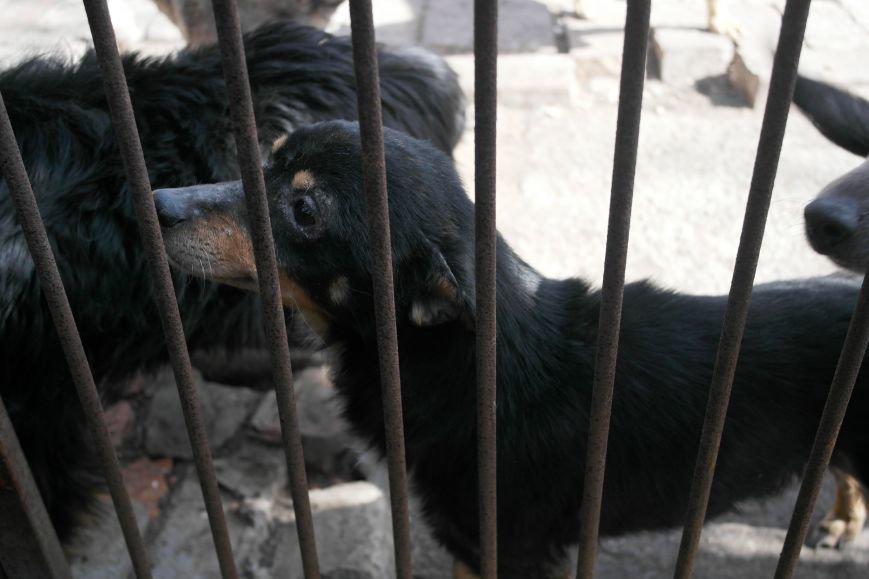 Донецкий приют для животных переехал в Красноармейский район: четвероногие переселенцы нуждаются в помощи, фото-18