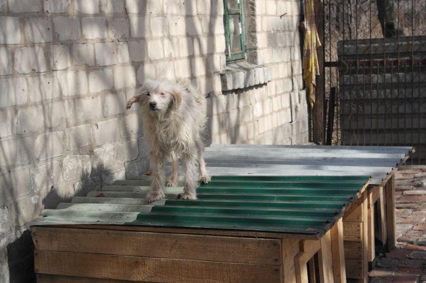 Донецкий приют для животных переехал в Красноармейский район: четвероногие переселенцы нуждаются в помощи, фото-17