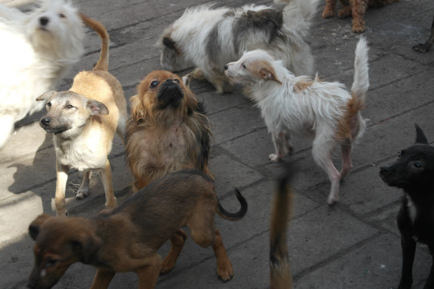 Донецкий приют для животных переехал в Красноармейский район: четвероногие переселенцы нуждаются в помощи, фото-6