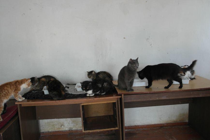 Донецкий приют для животных переехал в Красноармейский район: четвероногие переселенцы нуждаются в помощи, фото-11