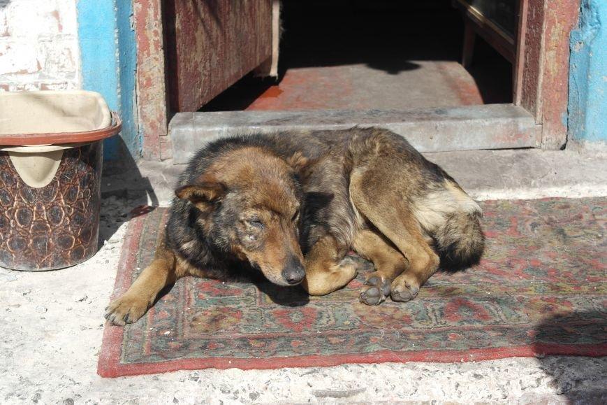 Донецкий приют для животных переехал в Красноармейский район: четвероногие переселенцы нуждаются в помощи, фото-4