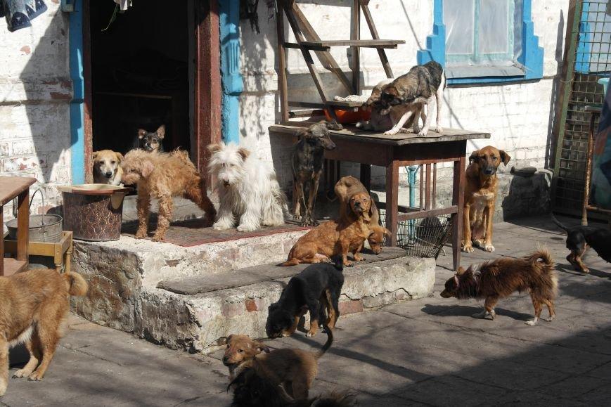 Донецкий приют для животных переехал в Красноармейский район: четвероногие переселенцы нуждаются в помощи, фото-8