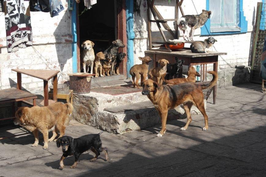 Донецкий приют для животных переехал в Красноармейский район: четвероногие переселенцы нуждаются в помощи, фото-7