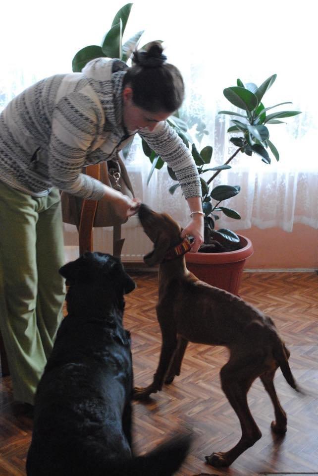 В одесском парке выбросили породистых щенков, доведенных голодом до истощения (ФОТО) (фото) - фото 1
