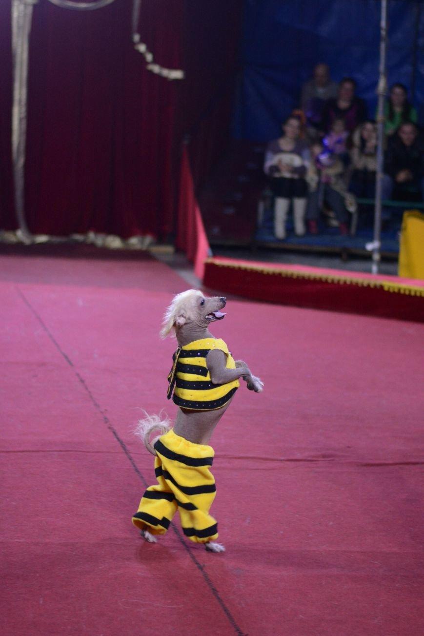 В Ульяновск приехал цирк, фото-1
