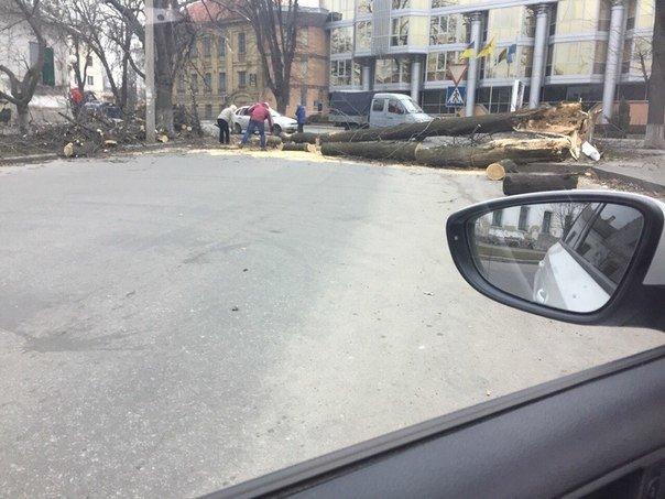 У Полтаві вітер ламав дерева та зносив дахи (ФОТО) (фото) - фото 1