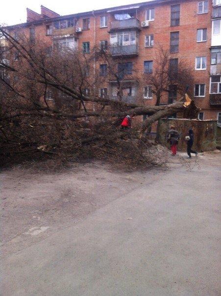 У Полтаві вітер ламав дерева та зносив дахи (ФОТО) (фото) - фото 3