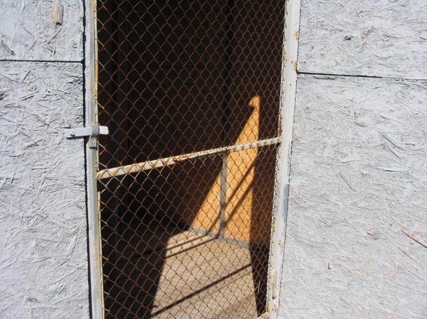 Приют для бездомных животных в Никополе построен  с многочисленными нарушениями, фото-4