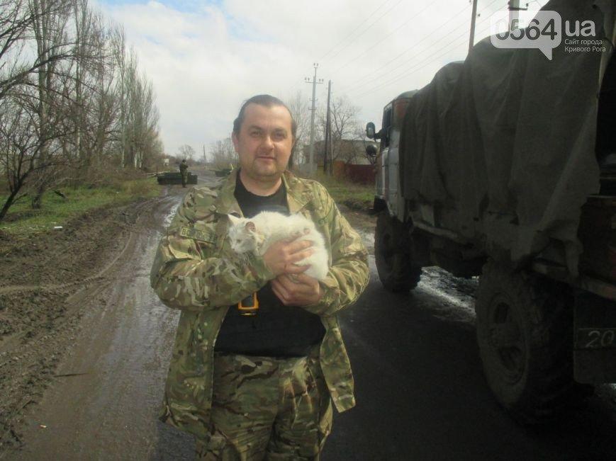 В Кривом Роге: активисты разрабатывают тариф на проезд в маршрутках, жители города сдают оружие, а волонтеры спасли животное (фото) - фото 3