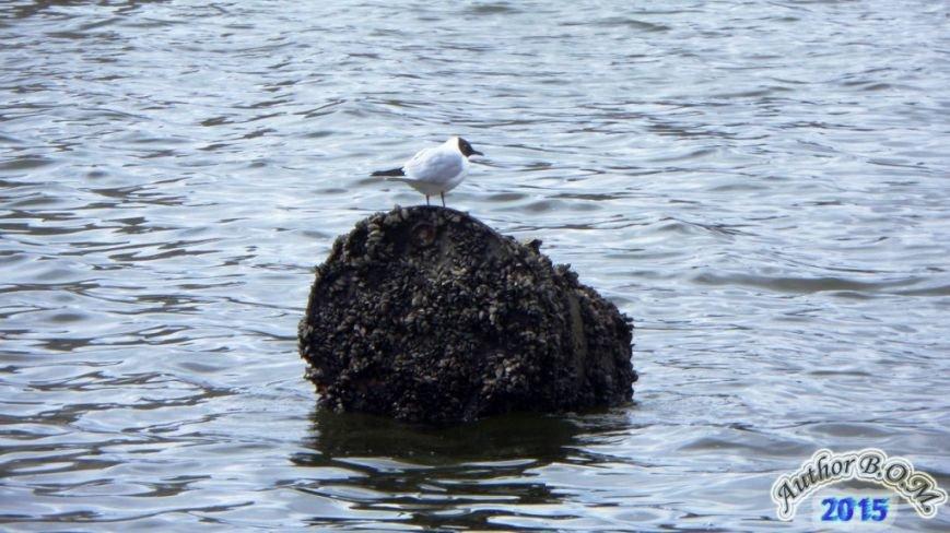 """На поверхні Тернопільського ставу плавають""""невідомі об'єкти"""" (фото) (фото) - фото 1"""