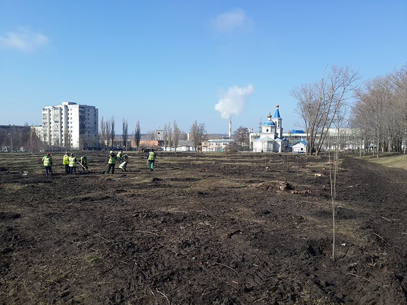 В белгородском парке Памяти высаживают новые деревья (фото) - фото 2