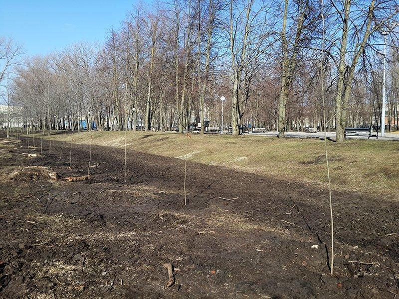 В белгородском парке Памяти высаживают новые деревья (фото) - фото 1