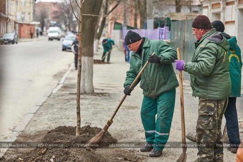 В Харькове на улице Коцарской высадили липы (ФОТО) (фото) - фото 1