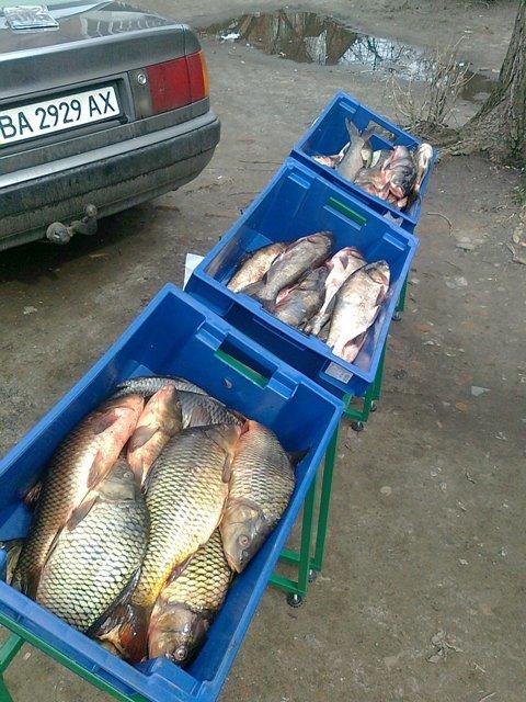 В Кировограде незаконно торговали рыбой (фото) - фото 1
