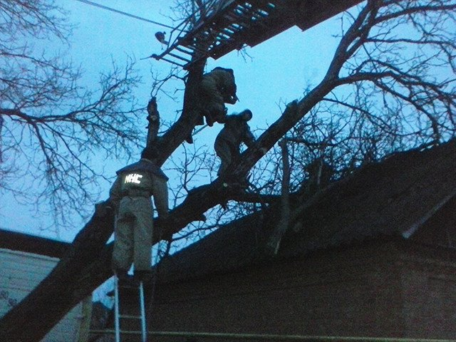 В Николаеве ураган повалил более 100 деревьев: в городе не ходят троллейбусы (ФОТО) (фото) - фото 2