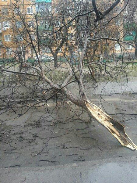 Последствия непогоды в Кривом Роге: деревом придавило ВАЗ, оборвало электропровода и перекрыло дорогу (ФОТО) (фото) - фото 5