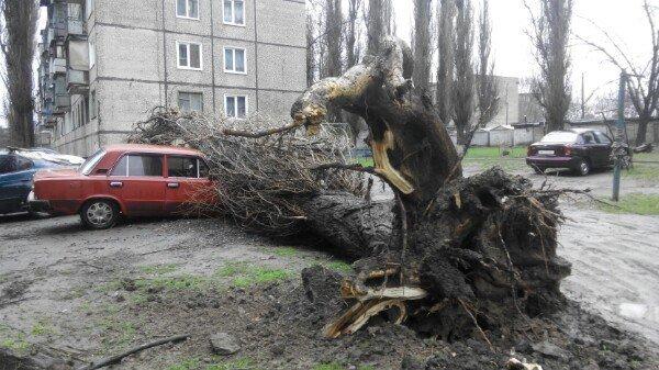 Последствия непогоды в Кривом Роге: деревом придавило ВАЗ, оборвало электропровода и перекрыло дорогу (ФОТО) (фото) - фото 1