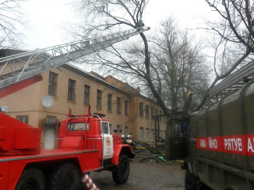 На Кіровоградщині рятувальники запобігли падінню аварійних дерев, фото-4