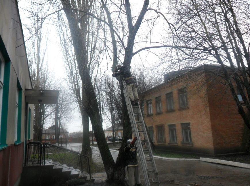На Кіровоградщині рятувальники запобігли падінню аварійних дерев, фото-2