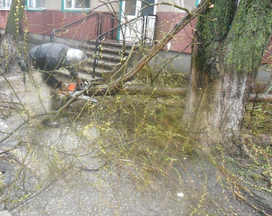 На Кіровоградщині рятувальники запобігли падінню аварійних дерев, фото-3