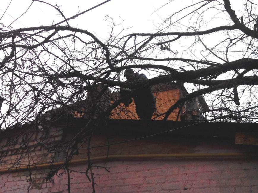 На Кіровоградщині рятувальники запобігли падінню аварійних дерев, фото-1