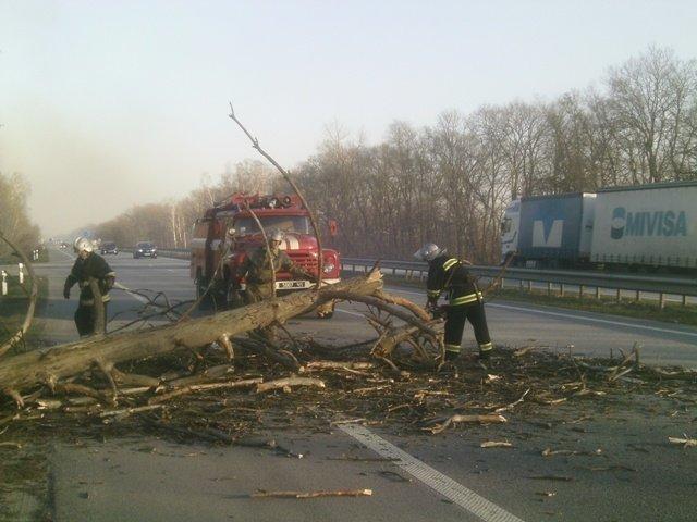 На Житомирщині сухе дерево перекрило дорогу на Рівне (фото) - фото 1