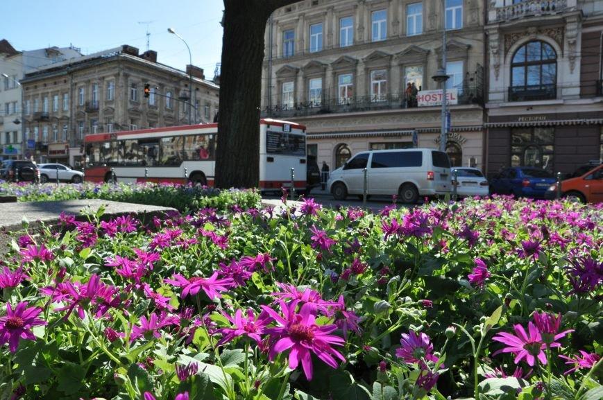 Львів розквітає: до Великодня у центрі міста висадили нових 3600 квітів (ФОТО), фото-2