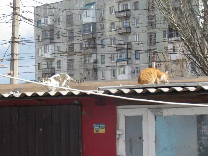 а.кот