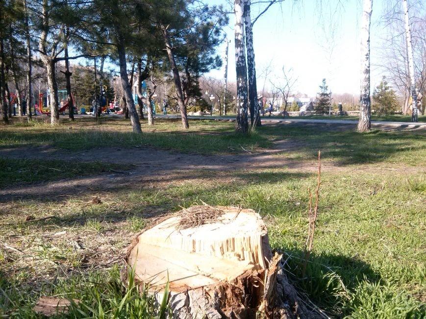 В Мариуполе продолжается вырубка здоровых деревьев для красоты ландшафта (ФОТОФАКТ) (фото) - фото 2