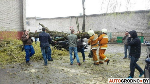 В Гродно из-за сильных ветров две ветки по 300 кг упали на автомобиль (фото) - фото 3