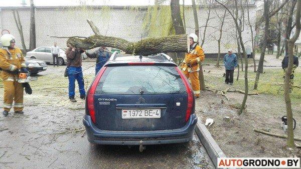 В Гродно из-за сильных ветров две ветки по 300 кг упали на автомобиль (фото) - фото 1