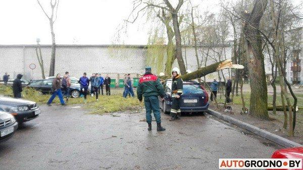 В Гродно из-за сильных ветров две ветки по 300 кг упали на автомобиль (фото) - фото 2