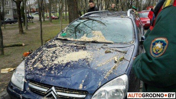 В Гродно из-за сильных ветров две ветки по 300 кг упали на автомобиль (фото) - фото 5