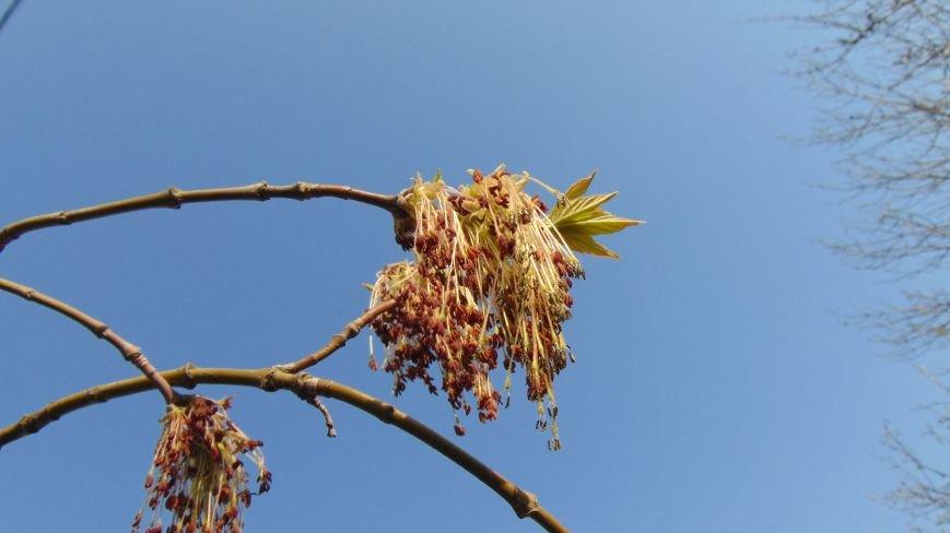 В Мариуполе произошло Пасхальное чудо. Дерево победило смерть (ФОТОФАКТ) (фото) - фото 1