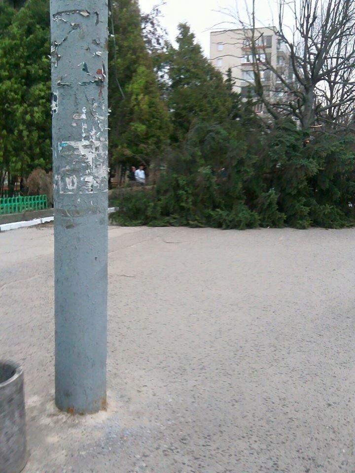 У Львові величезна ялинка впала прямо на зупинку (ФОТО), фото-2