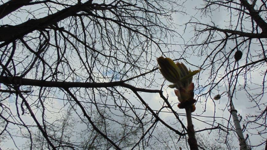 Испортившаяся погода в Мариуполе не помешала бурному «майскому» цветению (ФОТОФАКТ) (фото) - фото 2