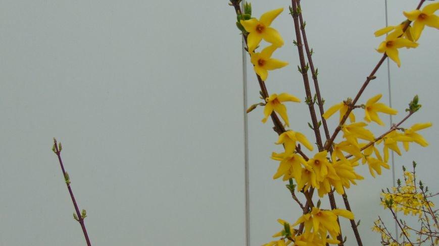 Испортившаяся погода в Мариуполе не помешала бурному «майскому» цветению (ФОТОФАКТ) (фото) - фото 1