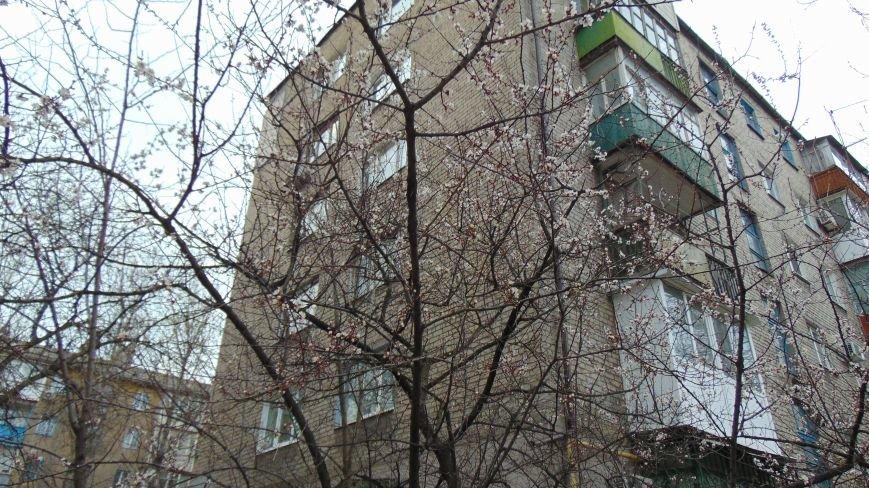 Испортившаяся погода в Мариуполе не помешала бурному «майскому» цветению (ФОТОФАКТ) (фото) - фото 3