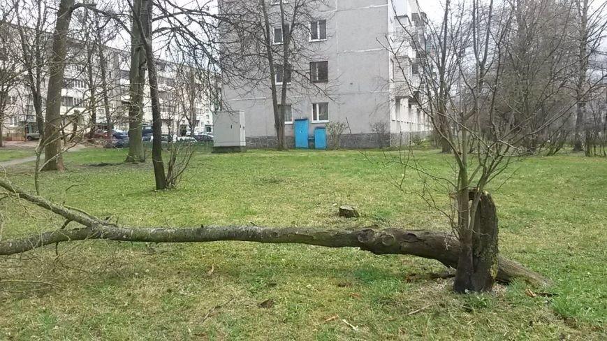 Фотофакт: в Гродно сильный ветер обрушил несколько деревьев и тумбу (фото) - фото 4