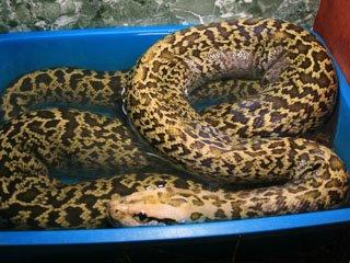 В зоопарке Николаева появилась новая коллекция рептилий (ФОТО) (фото) - фото 3