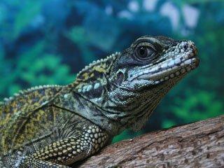 В зоопарке Николаева появилась новая коллекция рептилий (ФОТО) (фото) - фото 1
