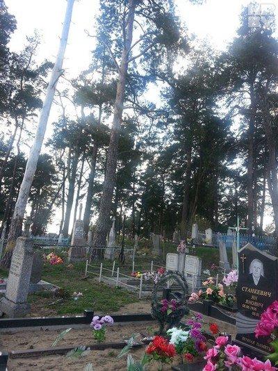 Пока уроженка Гродненщины полтора года сражалась с чиновниками, чтобы убрали старую сосну, дерево рухнуло само (фото) - фото 3