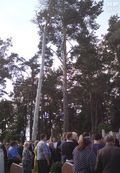 Пока уроженка Гродненщины полтора года сражалась с чиновниками, чтобы убрали старую сосну, дерево рухнуло само (фото) - фото 2