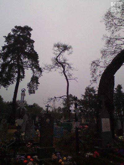 Пока уроженка Гродненщины полтора года сражалась с чиновниками, чтобы убрали старую сосну, дерево рухнуло само (фото) - фото 1