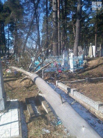 Пока уроженка Гродненщины полтора года сражалась с чиновниками, чтобы убрали старую сосну, дерево рухнуло само (фото) - фото 4