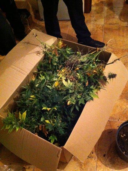 Конопляную оранжерею в Чернигове уничтожила милиция (фото) - фото 1