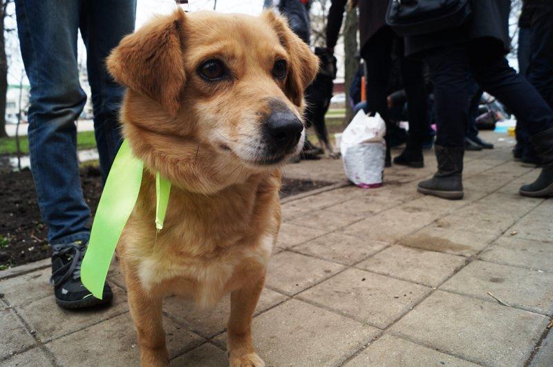 В Белгороде на выставке-раздаче 24 из 27 бездомных собак нашли себе дом (фото) - фото 4