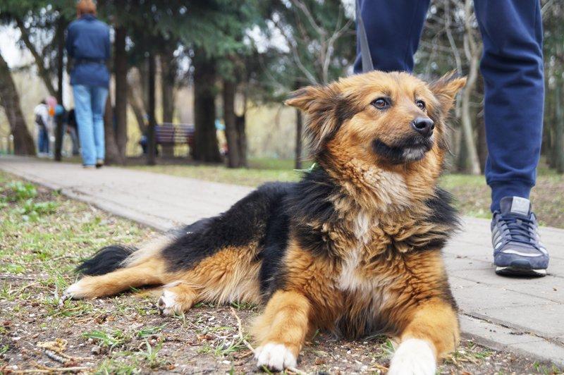 В Белгороде на выставке-раздаче 24 из 27 бездомных собак нашли себе дом (фото) - фото 1