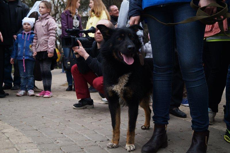 В Белгороде на выставке-раздаче 24 из 27 бездомных собак нашли себе дом (фото) - фото 5