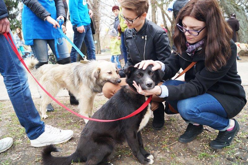 В Белгороде на выставке-раздаче 24 из 27 бездомных собак нашли себе дом (фото) - фото 3